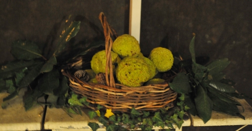 osage orange with magnolia leaves