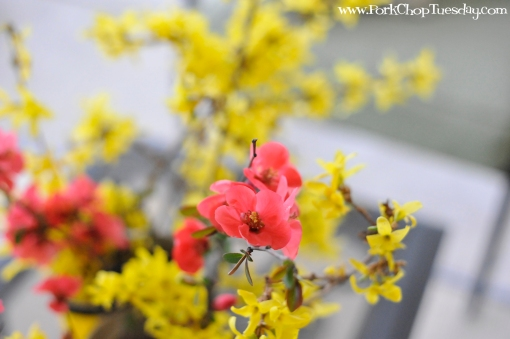 Flowering Quince | Pork Chop Tuesday