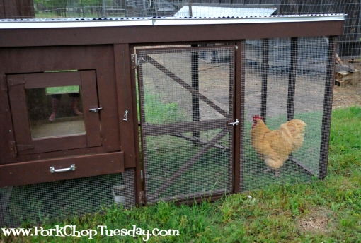 delux chicken coop