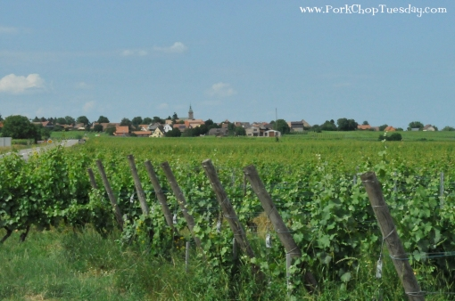 french-vineyards