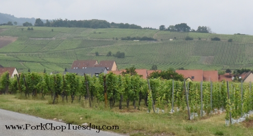 hillside-vineyards