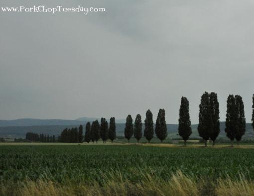 storybook-trees